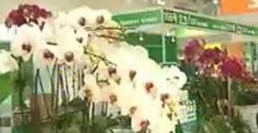 中國國際植物展覽會